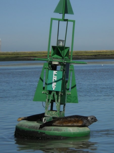 1469 Seals on buoy